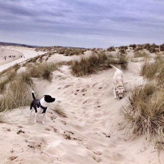 Micro and Austin at Camber Sands beach